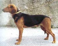 Собака с вытянутой мордой